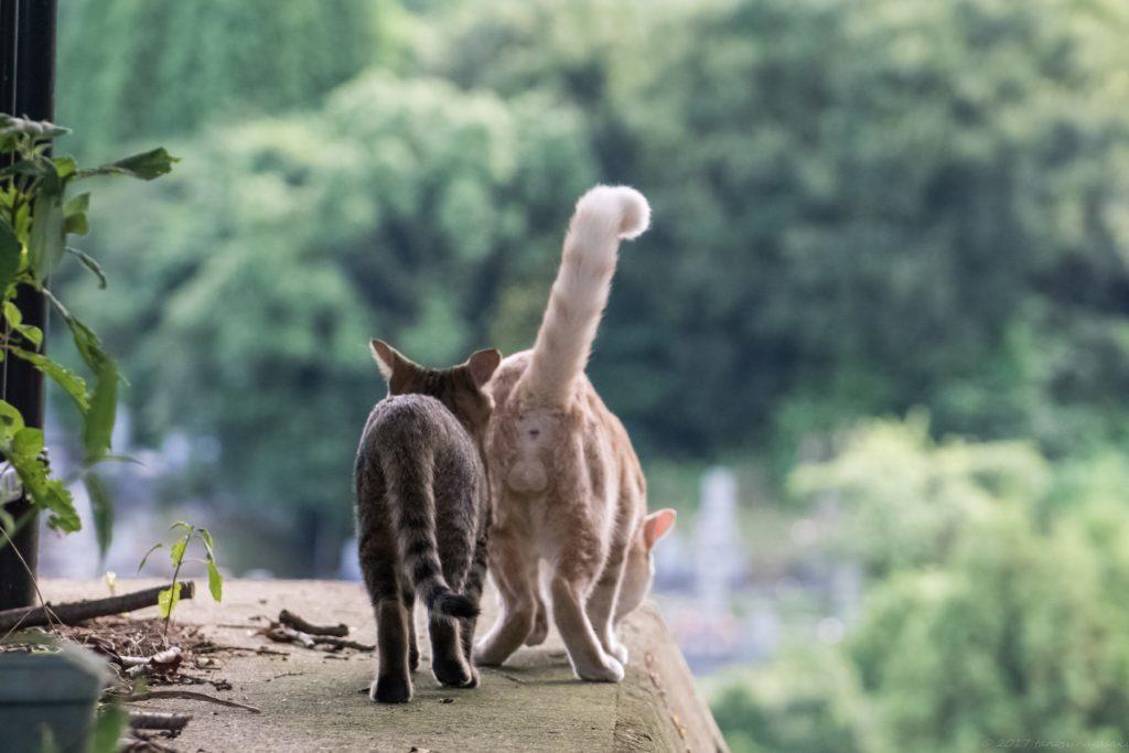 横瀬浦公園の親子の猫
