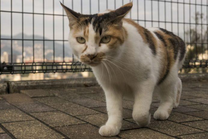 グラバースカイロードの猫