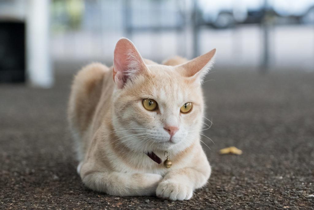 横瀬浦公園の親猫