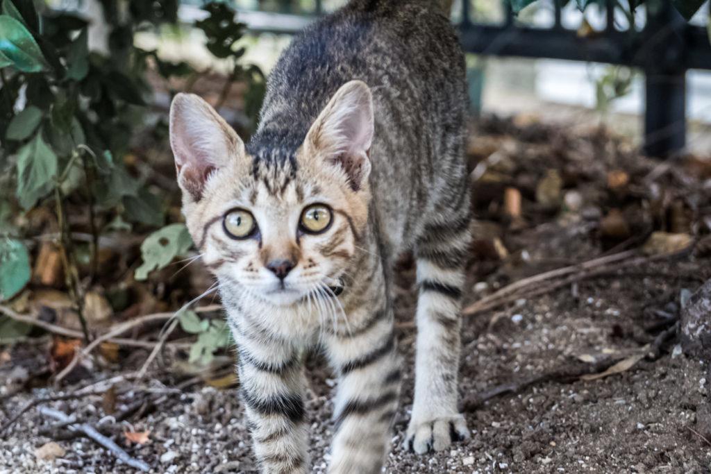 横瀬浦公園の子猫