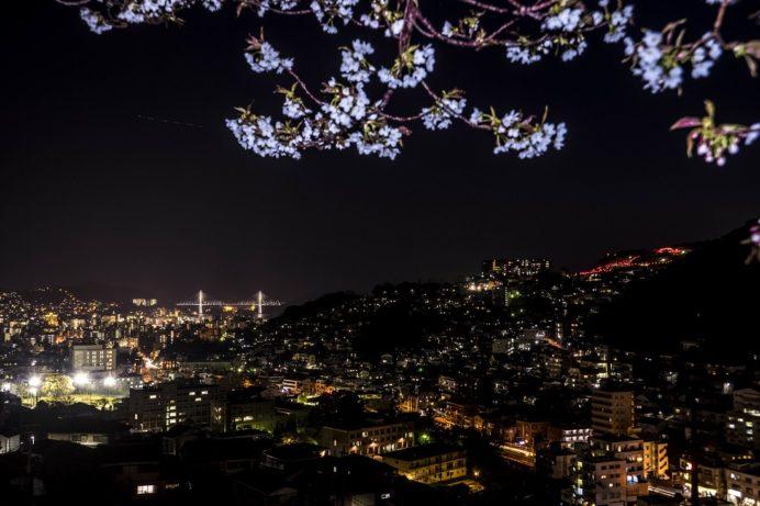 片淵近隣公園からの新世界三大夜景認定、長崎の夜景と夜桜