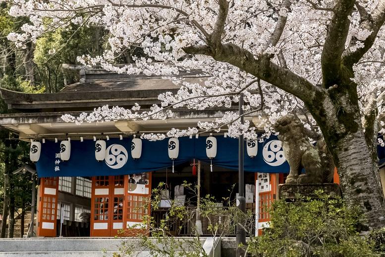 「淵神社の桜2021」(長崎市)【あの〇〇の聖地で花見⇒ロープウェイで稲佐山】GO!