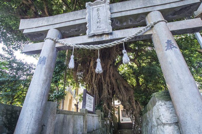奈良尾神社・アコウ樹(上五島)