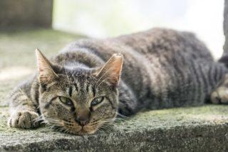 亀山社中記念館・龍馬通りは猫だらけ「日本の夜明けは近いか……ニャ???」
