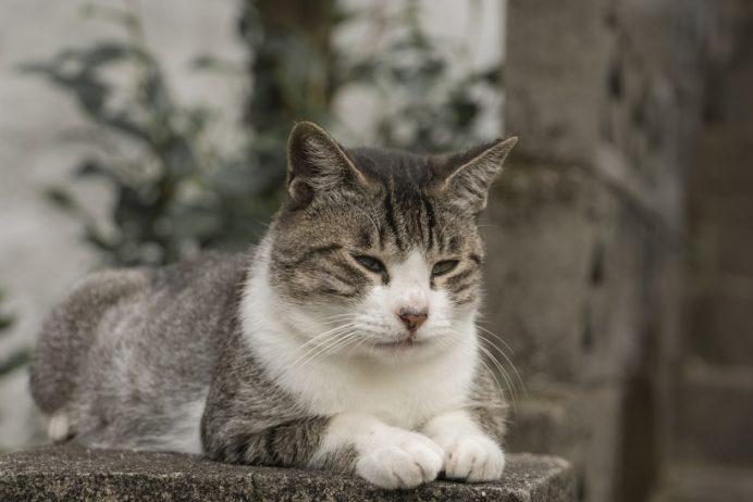 亀山社中記念館・龍馬通りの猫
