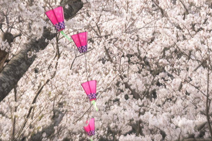 風頭公園(長崎市伊良林)での桜の花見
