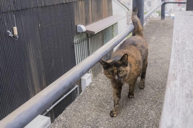 亀山社中記念館前。龍馬のぶーる像前の猫