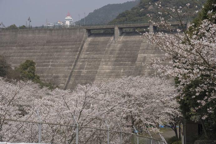 西山ダム下流公園(長崎市)の桜と花見