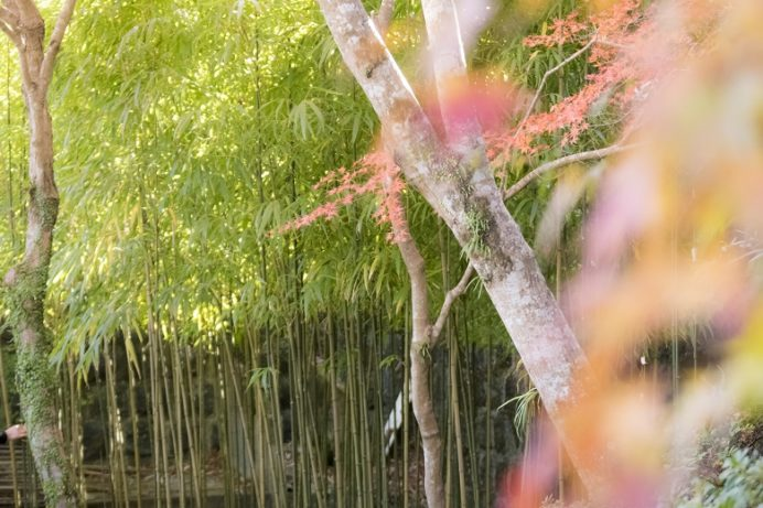 迎仙閣(長崎市松原町)の竹林