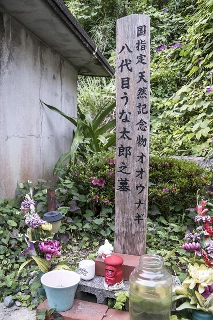 国指定天然記念物オオウナギ生息地 (樺島の大ウナギ井戸)、長崎市野母崎地区