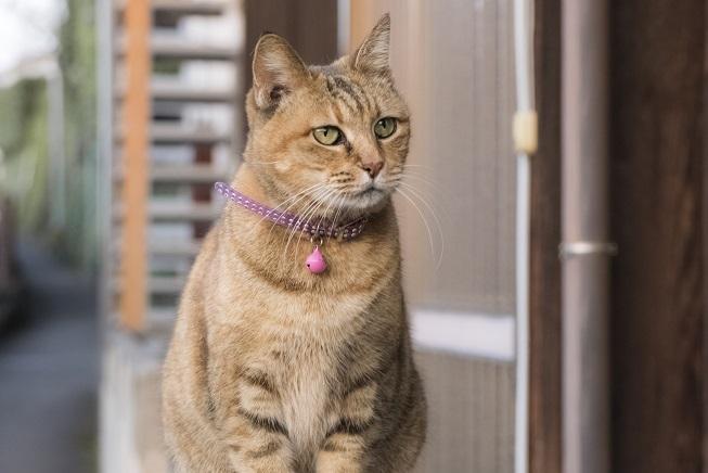 心田庵の猫「鈴ちゃん」(長崎市片淵2丁目)