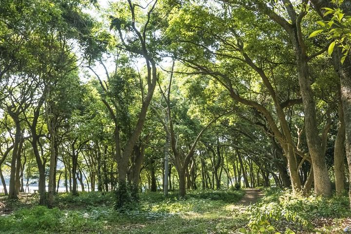 川原大池樹林 (長崎県天然記念物)、長崎市三和地区