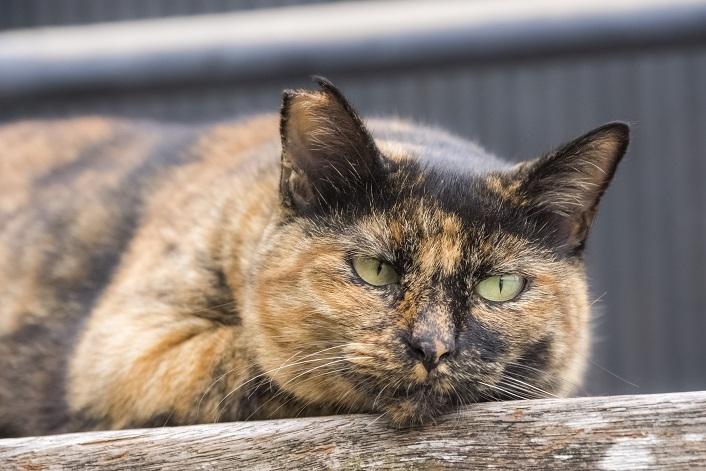 亀山社中記念館前・龍馬のブール像前の猫