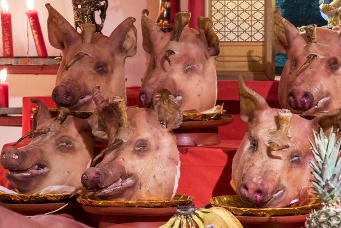 長崎ランタンフェスティバル(湊公園・新地中華街)の豚の生首