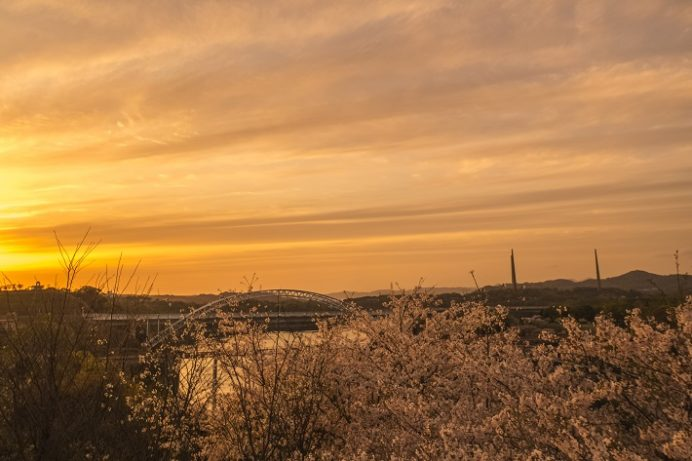 西海橋公園(長崎県西海市・佐世保市針尾)の桜と花見