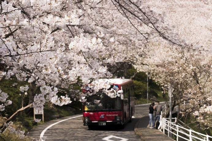 【満開日いつ?開花速報2021!】「立山公園の桜まつり」(長崎市)~宴会花見はココで決まり