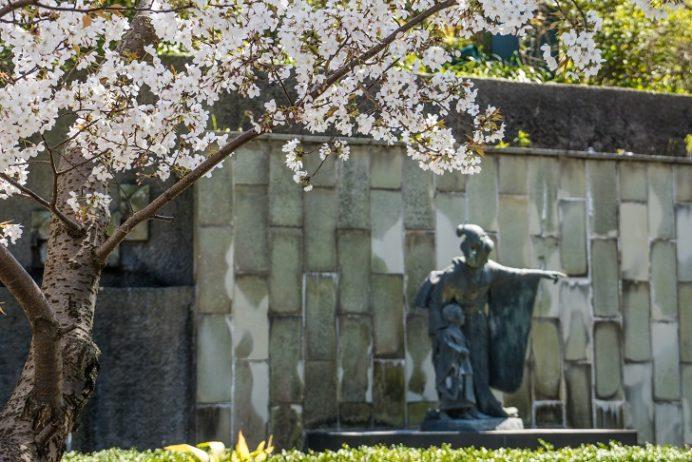 グラバー園(長崎市南山手町)の桜と三浦環像
