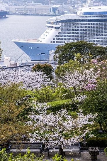 グラバー園(長崎市南山手町)の桜