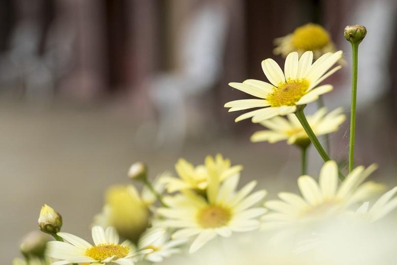 グラバー園(長崎市南山手町)の花