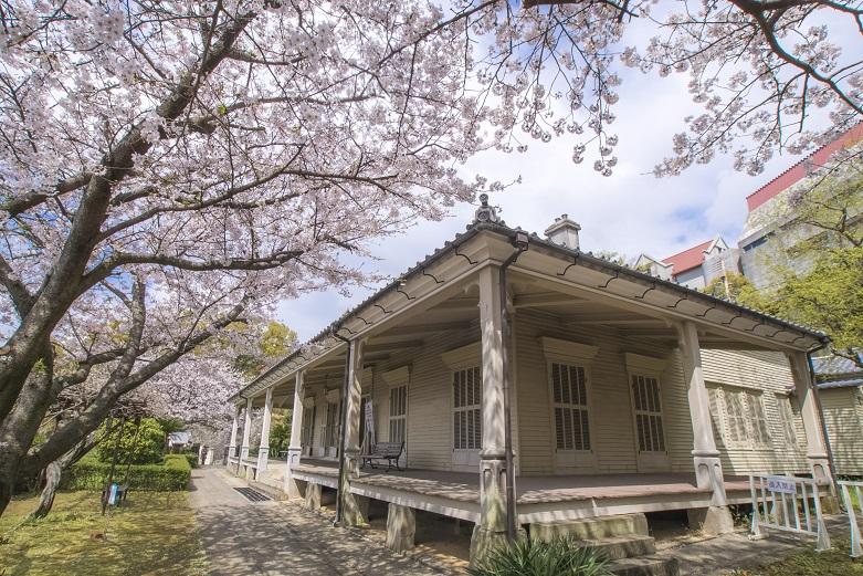 「東山手十二番館の桜」(長崎市)【自撮りに最適なメルヘン空間!】
