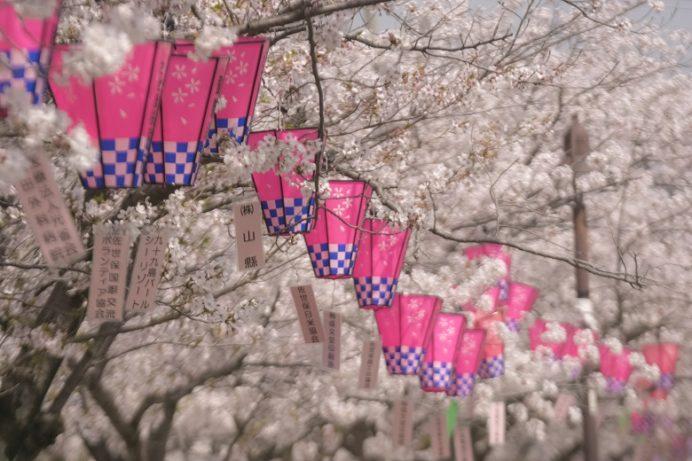 佐世保公園(長崎県佐世保市平瀬町)の桜と花見