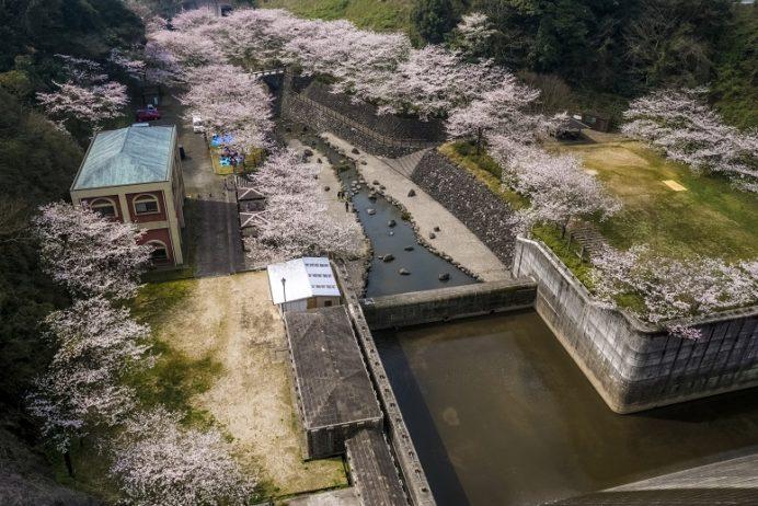 「西山ダム下流公園の桜」(長崎市)【お花見宴会の穴場】無料駐車場あり