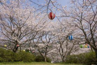 【開花速報2021!】「長与ダムの桜」(西彼杵郡長与町本川内)~花見のスーパー穴場