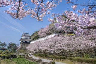 「大村公園の桜」~花見なら【日本さくら名所100選で!】~駐車場は?