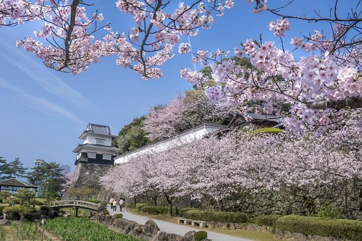 「大村公園の桜2021」~花見なら【日本さくら名所100選で!】~正確な見頃情報付き
