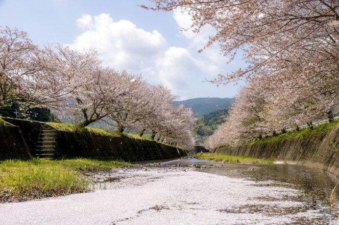 琴海戸根川沿い(長崎市)の桜と花見