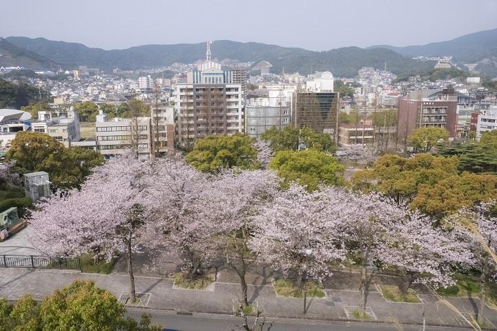 「平和公園の桜 2020」(長崎市)【平和を願い鑑賞を】宴会花見は禁止/開花情報付き