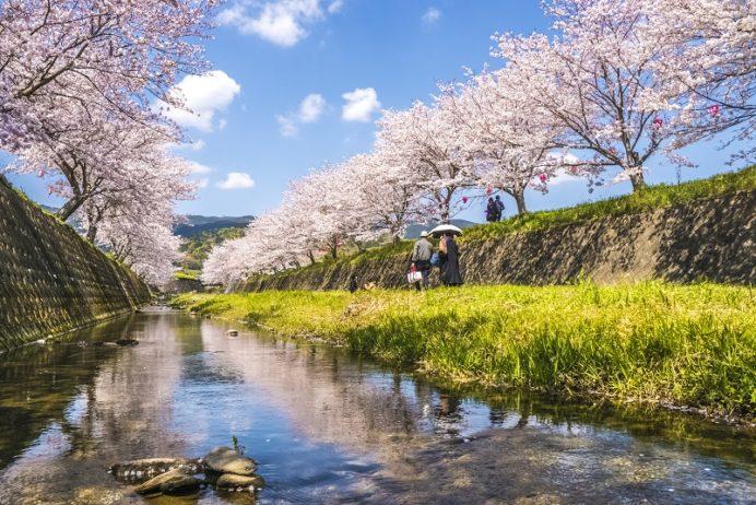 「琴海戸根川の桜 2020の開花はいつ?」(長崎市)【2キロの桜並木&菜の花畑。つまり極上空間!】