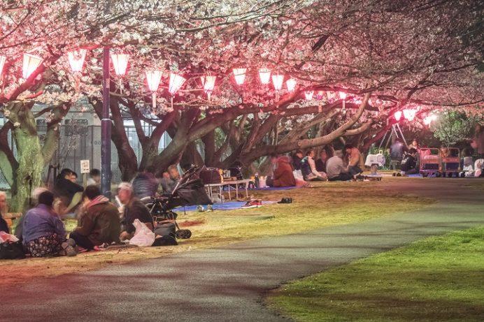 佐世保公園(長崎県佐世保市平瀬町)の桜と花見、夜のライトアップ