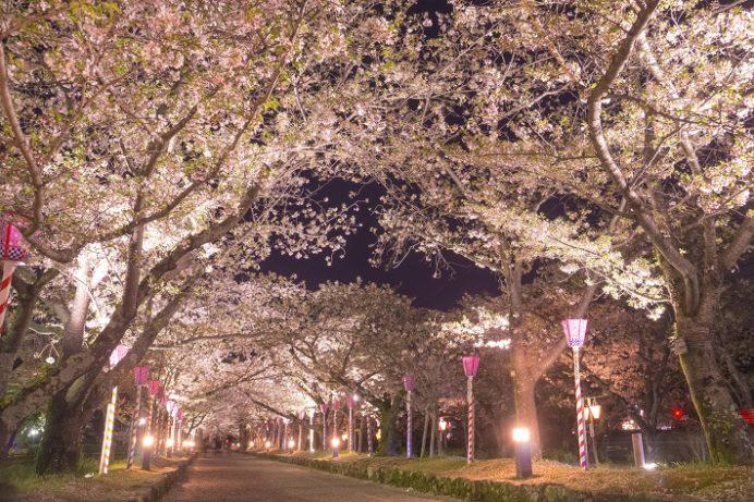 夜の大村公園(長崎県大村市玖島)の桜と花見