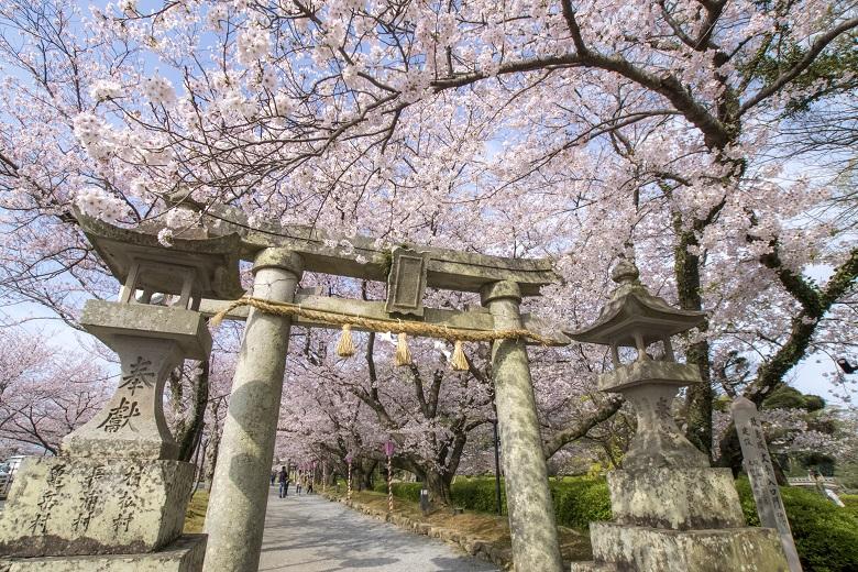 大村公園(長崎県大村市玖島)の桜と花見