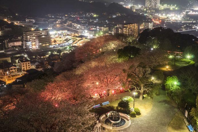 中尾城公園展望台の夜桜と夜景(長与町丸田郷中尾)