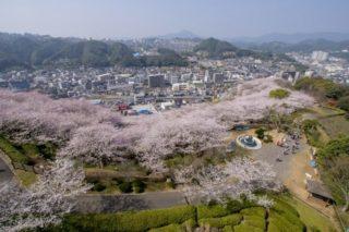【開花速報2021】「中尾城公園の桜」(長与町)~花見宴会に最適!駐車場は無料?