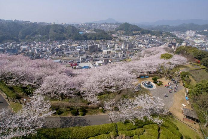 【中尾城公園の桜は広ーい】(長与町)~花見宴会に最適!駐車場は無料?