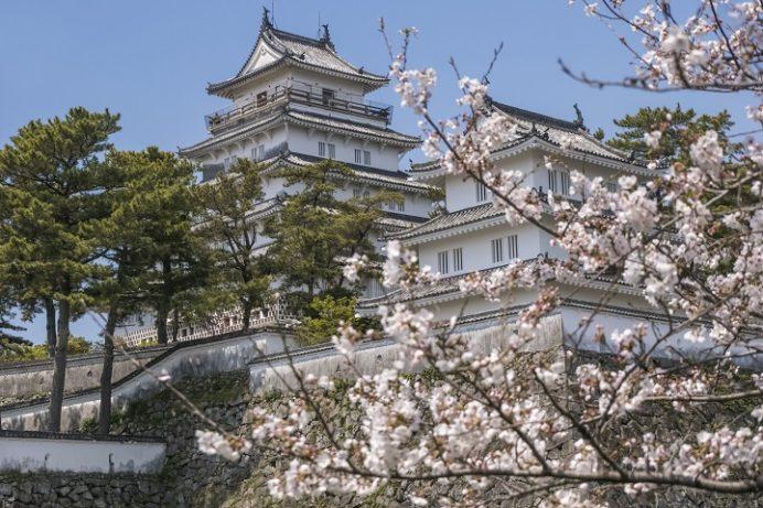 【正確な開花情報2020!】島原城の桜(長崎県)~天にそびえる天守閣で花見