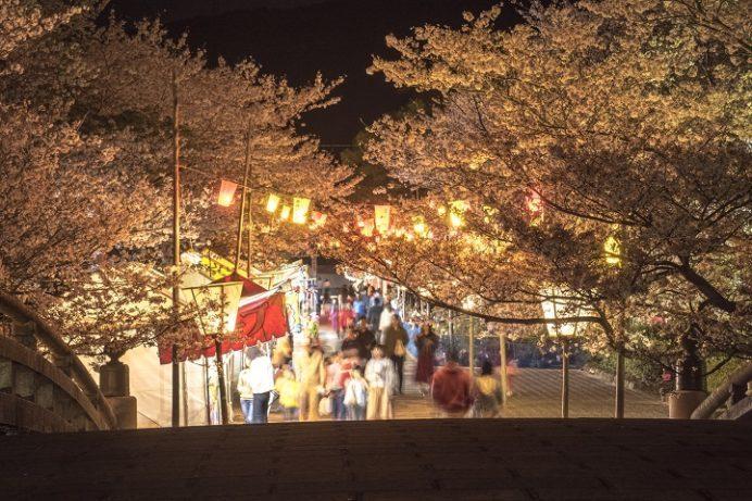橘神社(長崎県雲仙市千々石)の桜と花見、ライトアップ