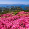 【見頃速報2021(4/15(木)更新)】「長串山公園つつじまつり」~奇跡の絶景ッ!証拠写真アリ