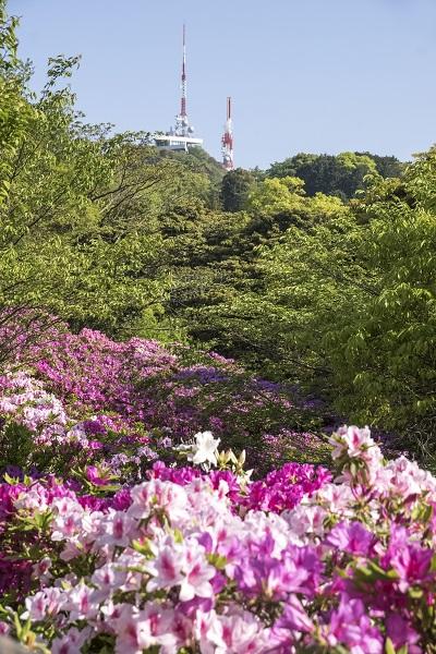 稲佐山つつじまつり(長崎市稲佐山公園)