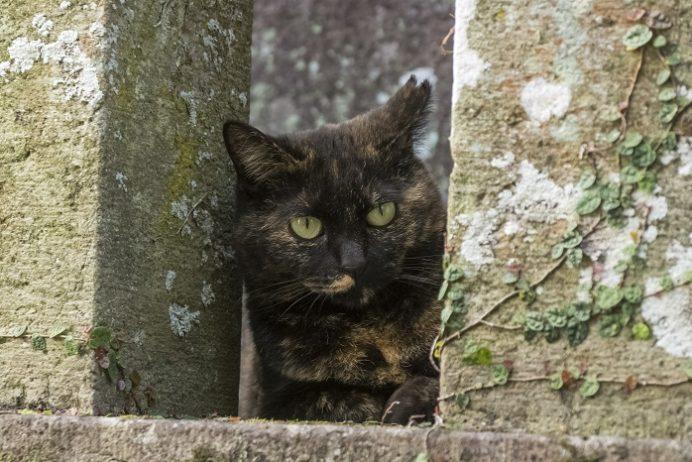 若宮稲荷神社(長崎市伊良林)の猫