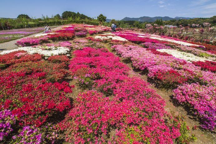 松本ツツジ園(長崎県大村市)