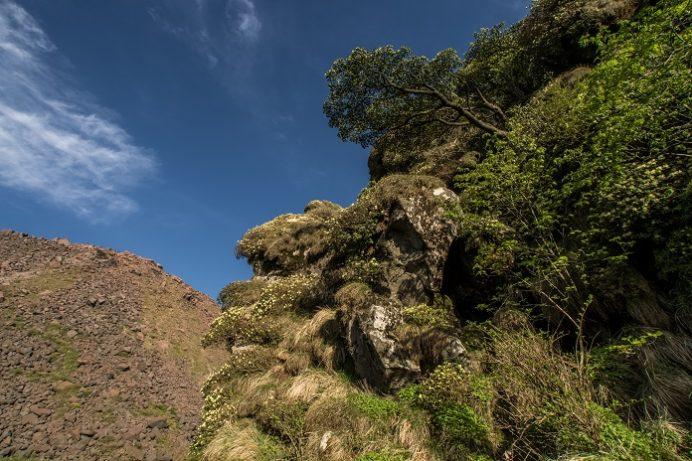 雲仙岳(立岩の峰・霧氷沢)のヒカゲツツジ