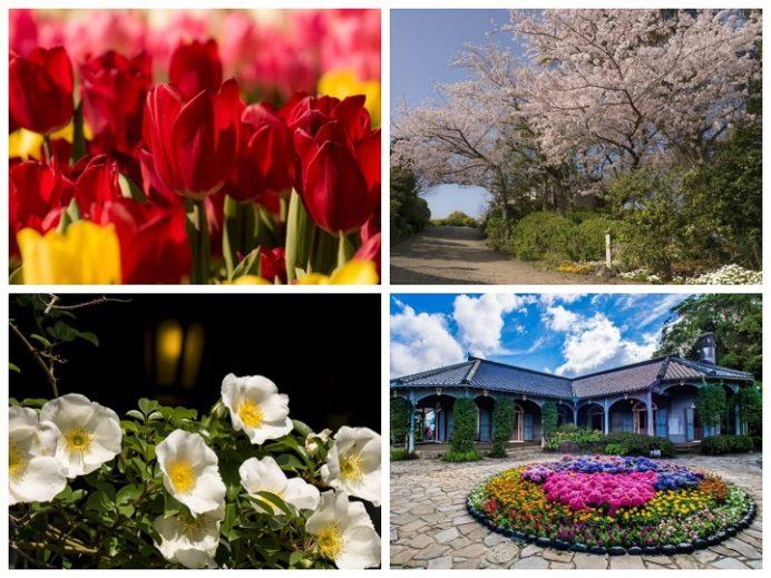 グラバー園(長崎市南山手町)の花々