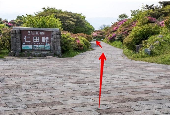 雲仙岳・仁田峠(長崎県島原半島)の白いミヤマキリシマ