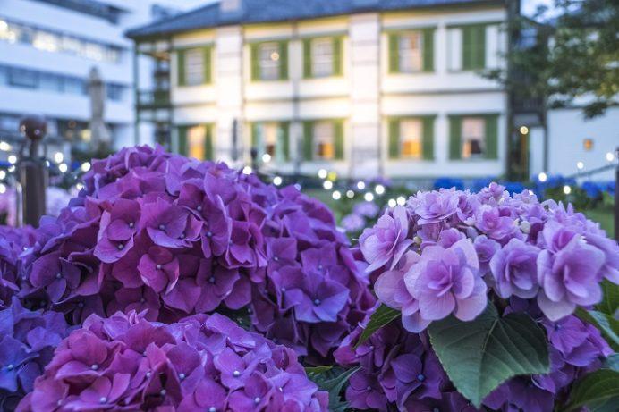 出島(出島和蘭商館跡)のながさき紫陽花(あじさい)まつり