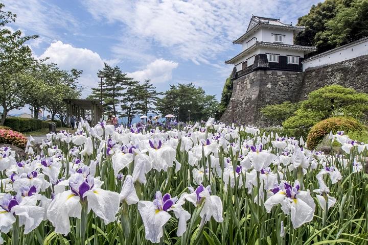 【花期終了】「大村公園 30万本の花菖蒲」~2020年の開花状況は?~