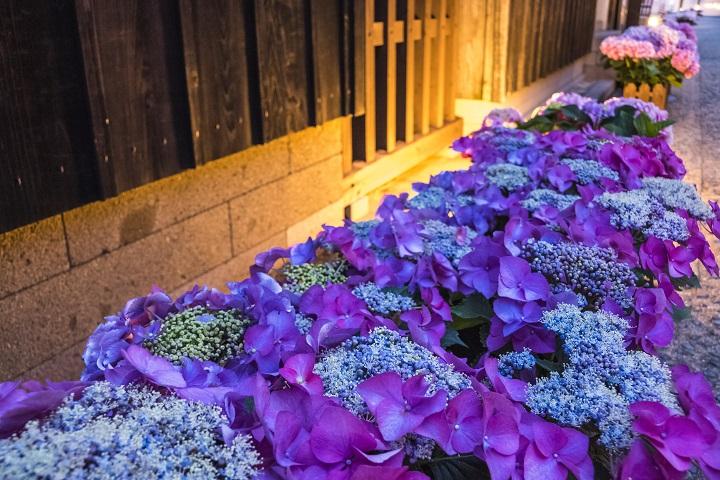 出島(出島和蘭商館跡)のながさき紫陽花まつりの夜間ライトアップ